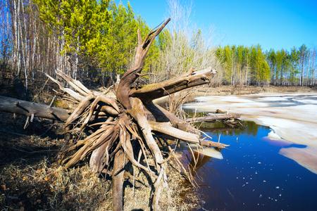 siberia: Landscape in early spring in Siberia, Yugra