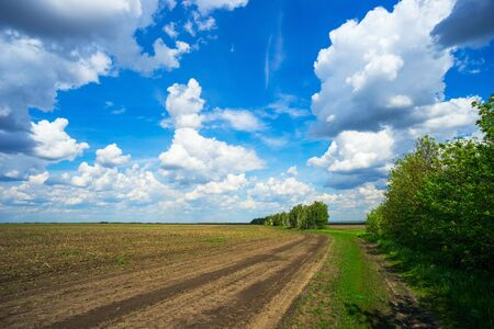 vastness: Spring landscape in field with blue sky and clouds.