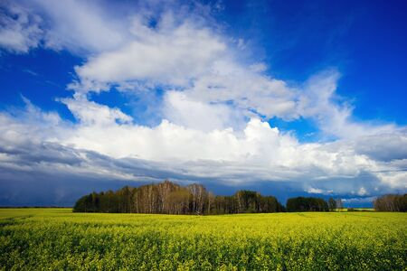 A yellow blooming canola field and blue sky with clouds. Stock Photo