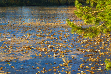 The dry leaves on the ice. Autumn landscape.