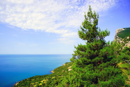 Young pine tree on the shore the sea