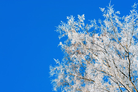 The frost on the branches of the trees , the view from the bottom up.