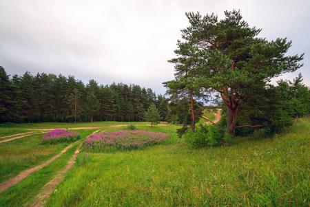 Koltush heights - natural landscape, Zuevo urban settlement, Vsevolozhsky district, Leningrad region, Russia