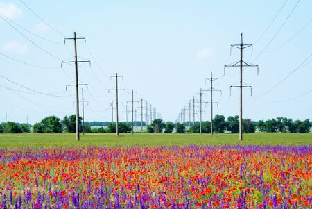 High-voltage power lines on flowering fields with red poppies .