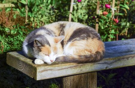 Tricolor cat sleeping on a bench in the yard.