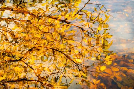 Water surface with reflection of autumn branches with leaves . Background