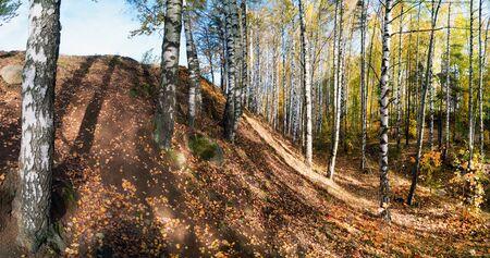 Birch grove on the mountainside . Autumn landscape.Vsevolozhsk, Leningrad region