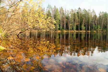 Reflection of the autumn shore in the water of the forest lake. Autumn landscape.