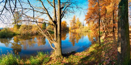 Picturesque autumn landscape. Yellow trees are reflected in the water of a small pond . Priyutino, Vsevolozhsk, Leningrad region.