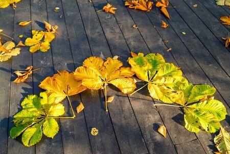 Autumn yellow chestnut leaves on the wooden floor .Elagin island. Saint-Petersburg
