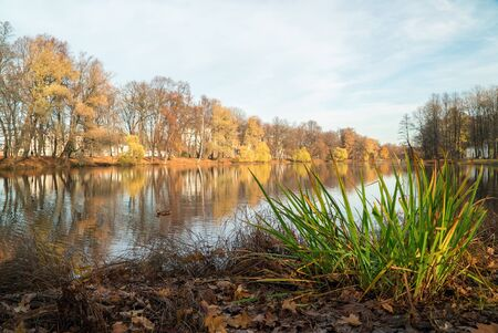 The pond in the late autumn .Elagin island. Saint-Petersburg Stock fotó - 133249841