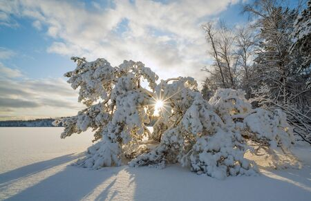 A fallen tree in the snow and sunlight on a frozen lake.