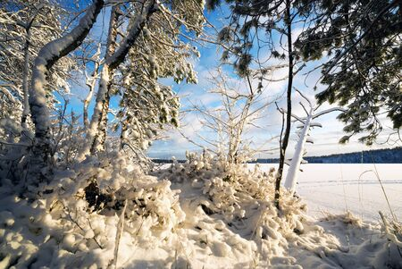Winter landscape with snow-covered trees on the shore of a frozen lake.