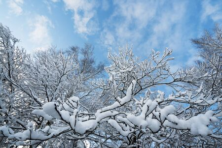 Snowy tree branches against the blue sky.
