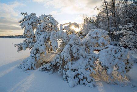 Winter landscape with snow-covered trees on the shore of a frozen lake. Leningrad region. Vsevolozhsk.