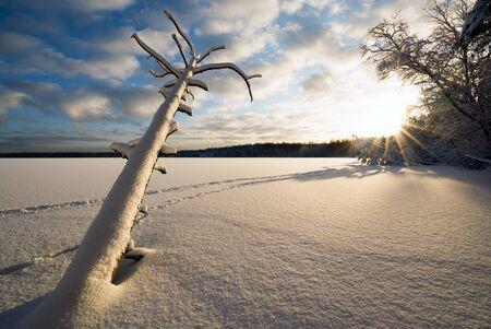 A fallen dead tree in the snow and sunlight on a frozen lake. Stock fotó