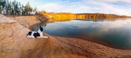 The dog is lying on a sandy slope on the Bank of a sand quarry.Panorama.