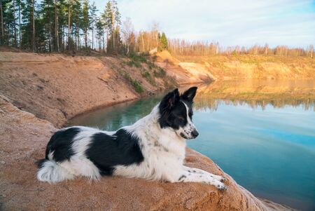The dog looks into the distance on the Bank of a sand quarry