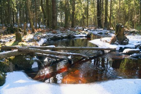 Not frozen stream in the forest in early spring. Vsevolozhsk. Leningrad region 免版税图像