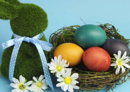 Blue theme Happy Easter scene still life with grass bunny rabbit with rainbow color eggs in a nest with white daisies  photo