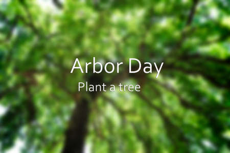 tree canopy: Arbor Day concept with blurred background image of tall tree canopy with added text.