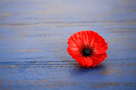 remembrance day: USA Memorial Day concept of red remembrance poppy on dark blue vintage distressed wood table, with copy space. Stock Photo