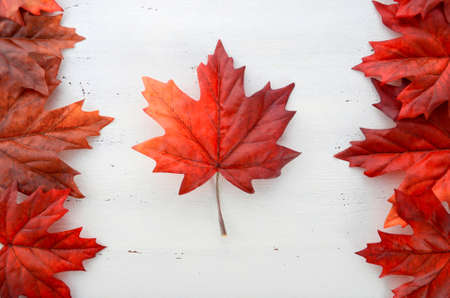 white day: Happy Canada Day red silk leaves in shape of Canadian Flag on white shabby chic wood table.