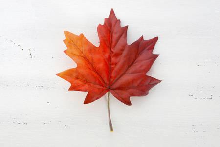 Glücklicher Kanada-Tag roter Seide Ahornblatt auf weißem Holz Shabby Chic Tisch Standard-Bild - 40961081