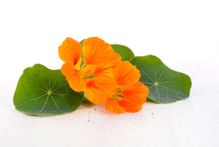 Small bouquet of edible orange nasturtium flowers and leaves on white wood rustic table, for floral or salad ingredient.