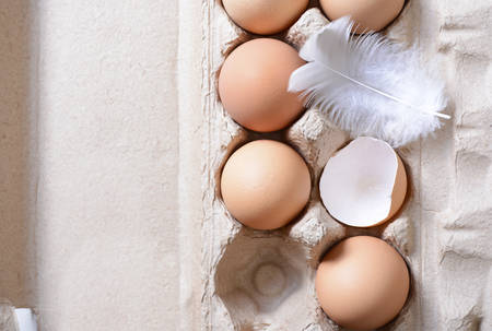 egg carton: Farm fresh eggs in egg carton, with chicken feather and broken shells on white vintage wood table, closeup. Stock Photo