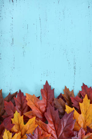 Autumn Fall rustic background on aqua blue vintage distressed wood with autumn leaves and decorations. Stockfoto