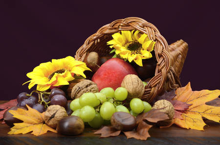 horn of plenty: Thanksgiving cornucopia, wicker horn of plenty, centerpiece with fruit, nuts, leaves and sunflowers on dark wood table.