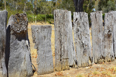 weathered: Very old weathered wooden fence made from Australian eucalypt gum tree stumps.