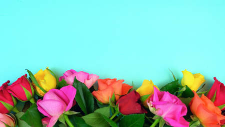 Springtime ovehead with fresh colorful Spring roses on an aqua blue wood table background. Stock Photo