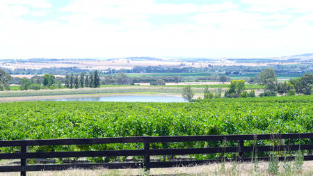 Rows of grapevines and surrounding valley from Lily Farm Road in the Barossa Valley, South Australia.