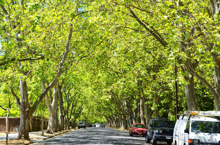 Driving under beautiful tree canopy along scenic Victoria Avenue, Unley Park.