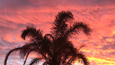 Palm tree against vivid colorful sunset with copy space. 写真素材