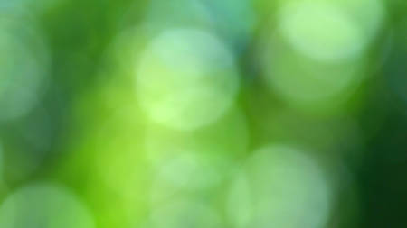 Blurred background of colorful bokeh defocused greenery nature background.