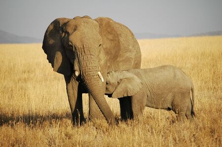 Mother and  Elephant