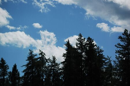 trees, clouds and sky