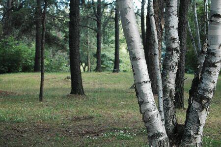 trees Stock Photo - 1335820