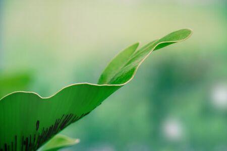 Big fern leaf close up with blur background like the mist or rain