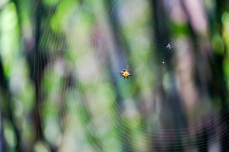 The yellow spider hang on the web 写真素材