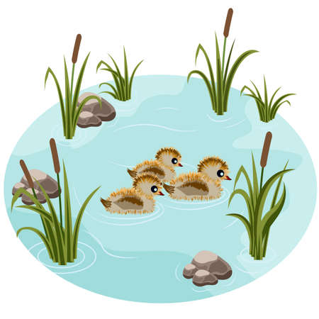 Pond with little ducks, reeds, grass and stones. Fits as a cartoon or game scene. Vector illustration