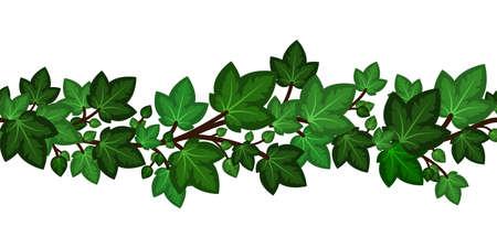 Ivy leaves branch.Summer green border for decoration. Summer climbing garden isolated. Vector illustration