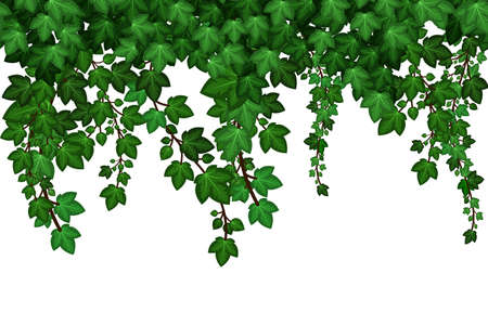 Ivy leaves texture, natural plant wall. Summer green foliage on white background. repeat pattern Vector illustration