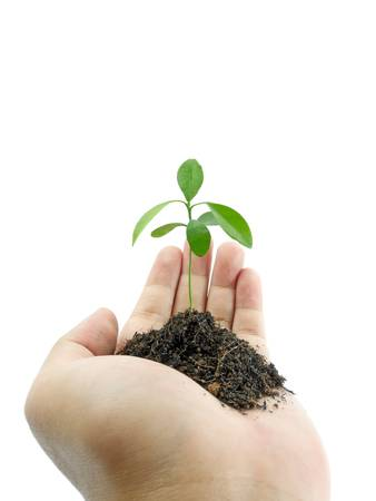 Hand holding a small plant isolated on white background photo