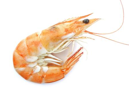 Beautiful shrimp photo