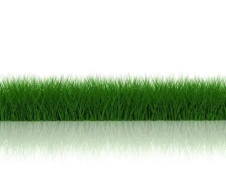 Gras met reflectie op witte achtergrond Stockfoto