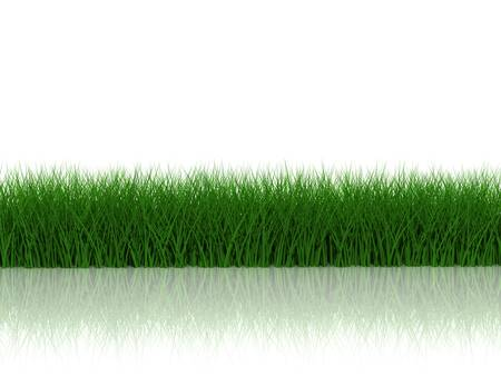 Grass with reflection on white background